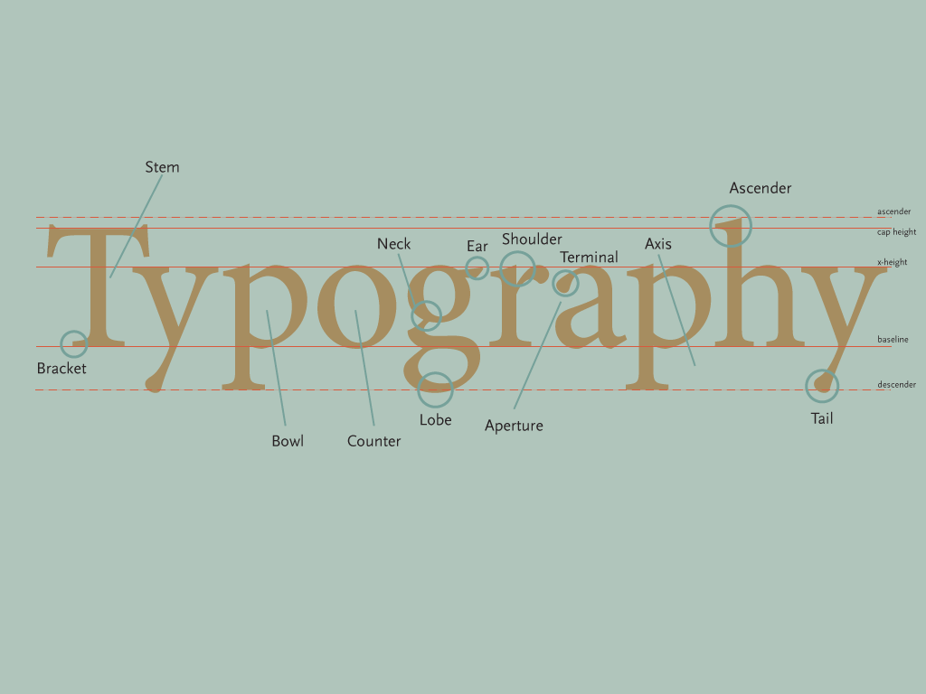 Anatomy Of Type Refresher Susie Smith
